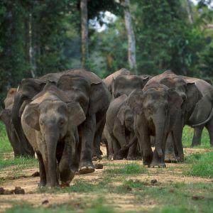 Credit: Cede Prudente, World Wildlife Fund, Malaysia/CC
