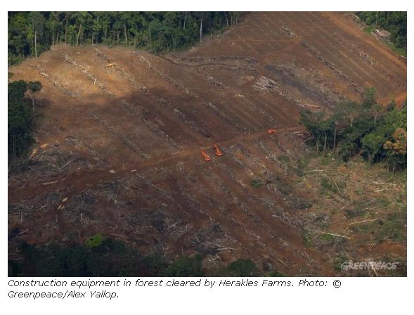Snapshot of the stunning images you can find of the rainforest destruction ongoing in Cameroon on mongabay.com
